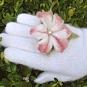 Filzblütenring 3