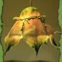 Blüten-Lampe