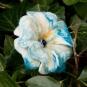 Türkise Blüte mit Glasperle