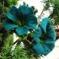 Zwei blaugrüne Filzblüten