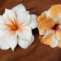 Filzblüten orange und weiß