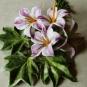 Blüten-Ensemble