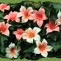 Filzblüten am Efeu