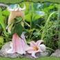 Filzelfchen mit Blüte