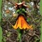 Filzelfchen im Apfelbaum 1