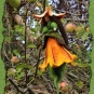Filzelfchen im Apfelbaum 2