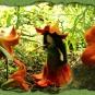Lilienelfchen