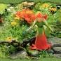 17-09-27-Ringelblumen--Elfe