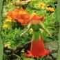 17-09-27-Ringelblumen-Elfe