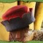 Rotblauer Zinnenhut