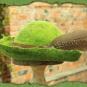 Grüner Streunerhut