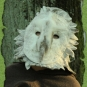 Schleiereulenmaske