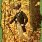 Fuchs im Herbstwald 1