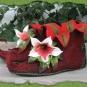 Weinrote Elfenschuhe mit Blüten 1