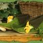 Elfenschuhe mit gelber Blüte