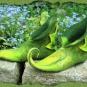 Grüne Elfen-Schuhe mit Blatt 2