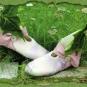 Fliederfarbene Elfenschuhe