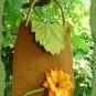 Blatt und Blume
