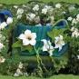 Blaugrünes Blütenmeer